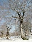 雪解け木々.JPG