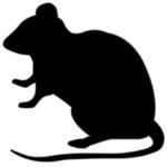 ネズミ2.jpg