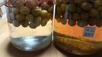 梅酒 (2).JPG