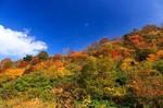 紅葉 栗駒山.jpg